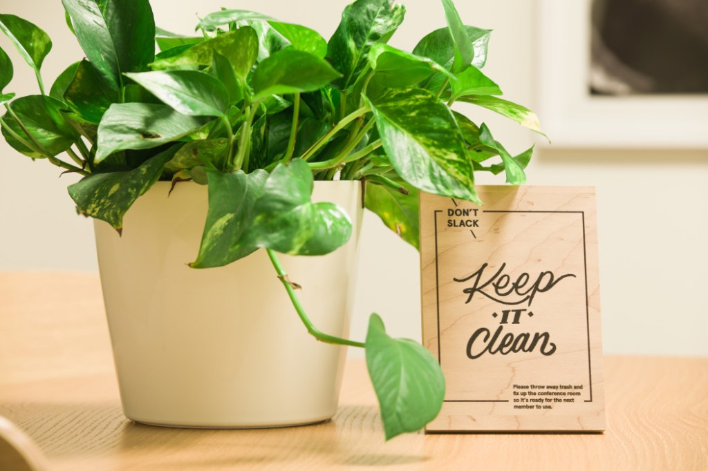 """A pothos houseplant with a wooden sign writing, """"don't slack, keep it clean"""""""