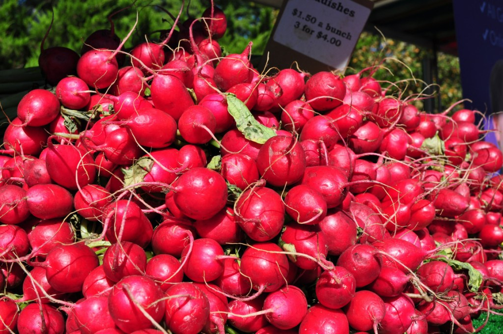 a pile of red cherry belle radishes