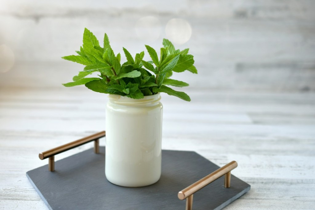 A sprig of mint in a jar