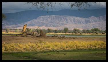 BBC Campsite scenery at Mana Pools, Zambesi Valley