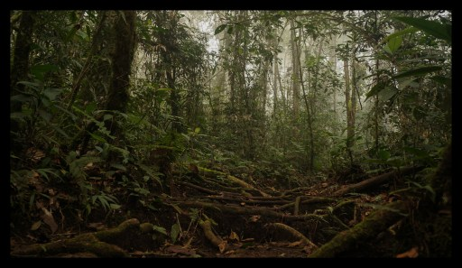 Cloud Forest at Espino Blanco, Turrialba