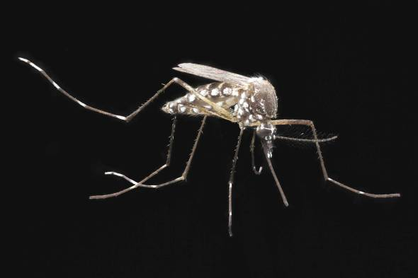 The country has seen a dramatic increase in the mosquito-borne Chikungunya regions of northeast Colombia most severely affected.