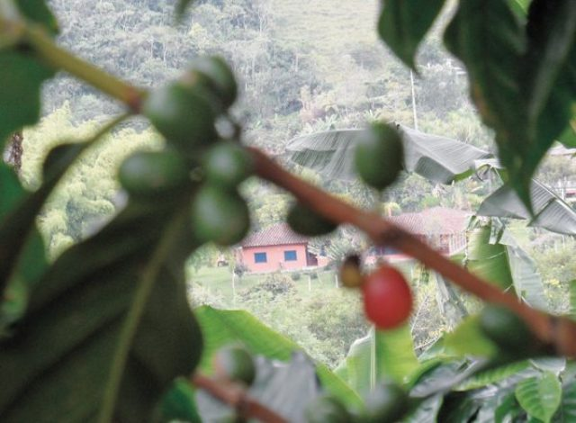 Salento Colombia, Colombian coffee