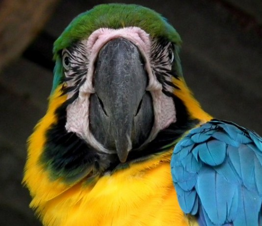 Putumayo Colombia, Colombian Amazon