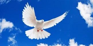 Colombian Peace Process