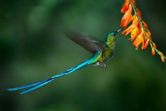 biodiversity summit in Medellin colombia