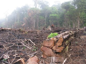 Deforestation Amazon Colombia