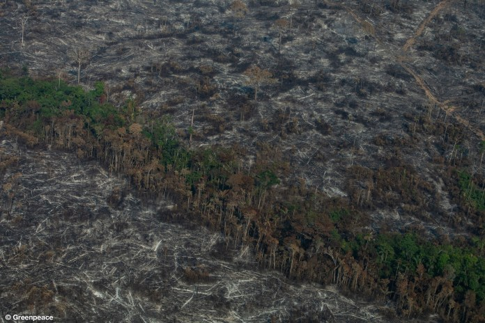 Aerial view of burned areas in the Brazilian Amazon released by Greenpeace this month. Image by Victor Moriyama/Greenpeace.