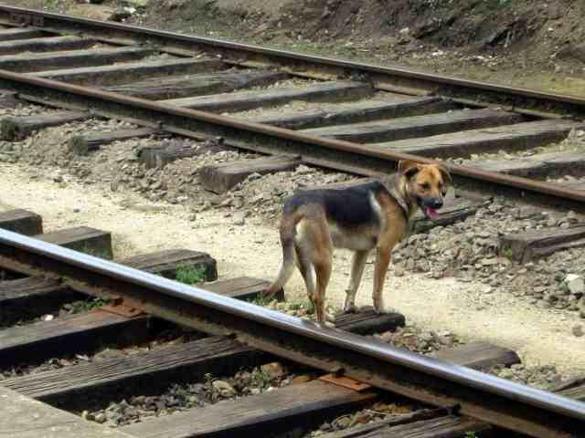 Train to Ella Sri Lanka