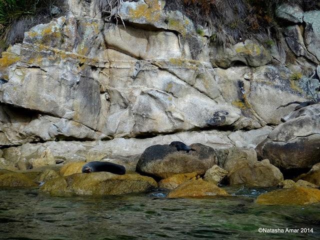 Kayaking in the Abel Tasman National Park