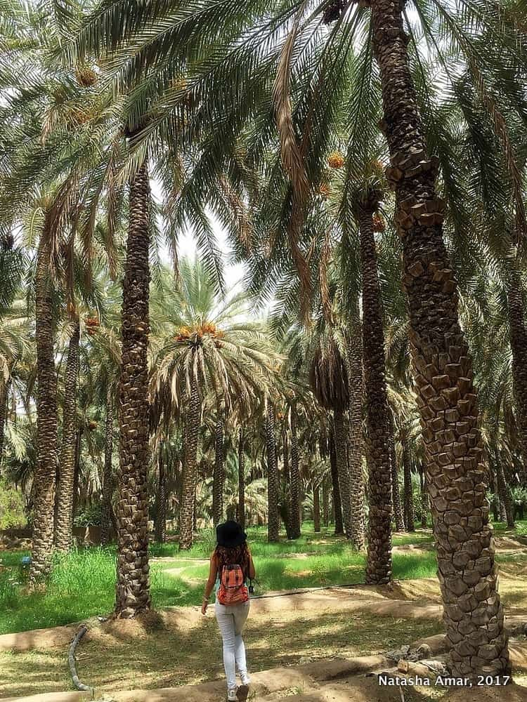 Top Things To Do in Al Ain: Visit the Al Ain Oasis