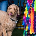 It's a dogs life at the Hyde Park Street Fair 2017