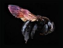 F_bees
