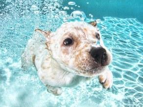 pups_diving4