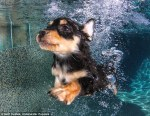 pups_diving6
