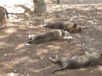 the puppies - photo credit AEB