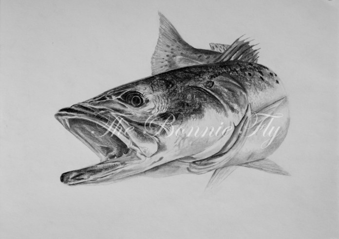 Speckled Trout, Seafood Series, Charcoal 12x9