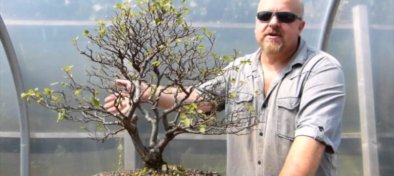 Pruning Deciduous Bonsai Trees