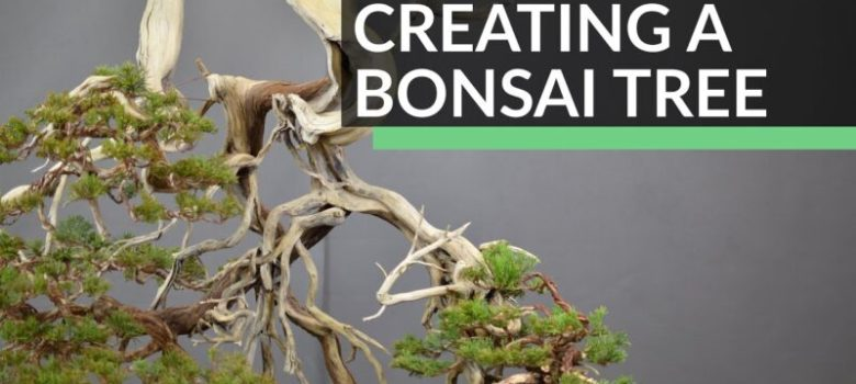 Creating a Bonsai tree