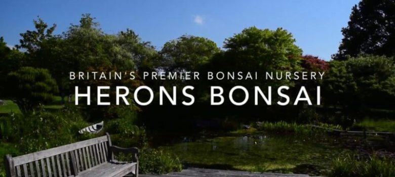 How to Propagate Bonsai and Make Cuttings