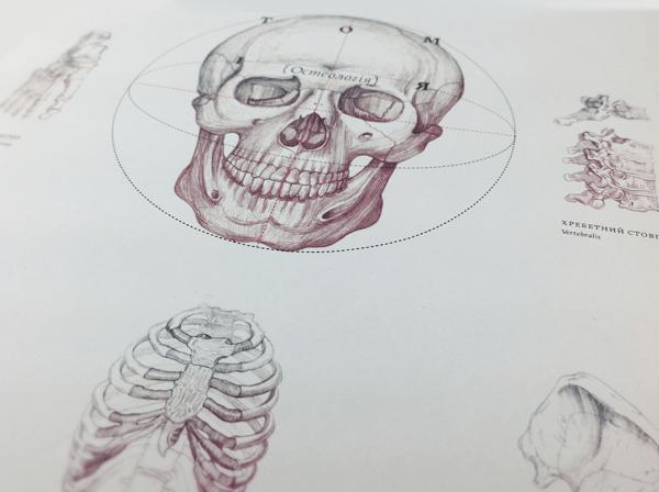 anatomy osteology book design inspiration medical diagram skull