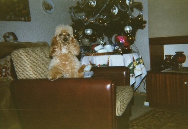 film photograph of a dog