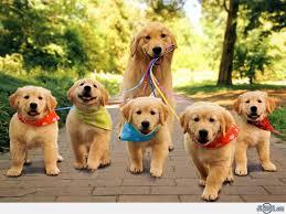 Pick a puppy!