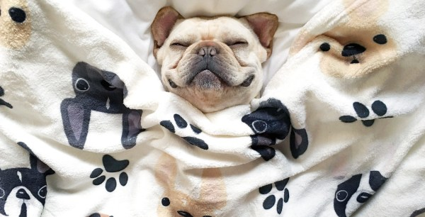 bulldog-blanket