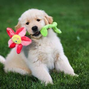 Playful Pupper