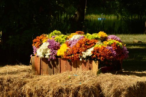 flowers in crates on hay