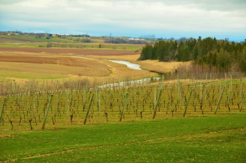 wolfville wineries