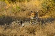 Travel Expert Packing List for Safari
