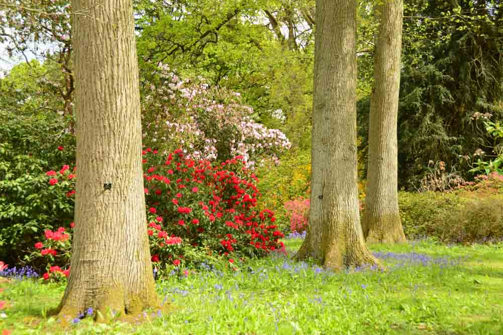england_cotswolds_westonbirt-arboretum-colourful-flowers-trees
