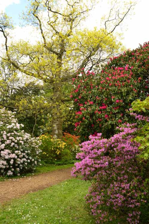 england_cotswolds_westonbirt-arboretum-in-bloom
