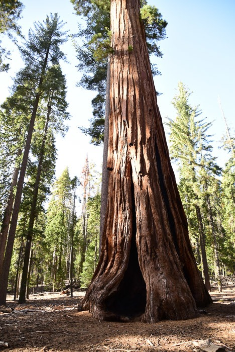 california_yosemite_mariposa-grove-4