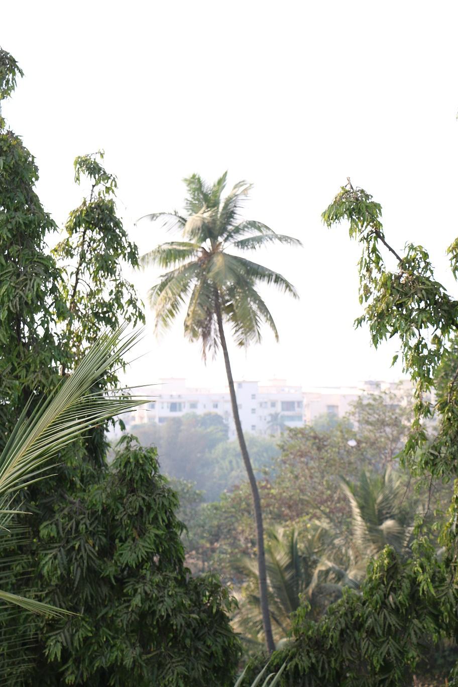 Mumbai_HangigGardens_1