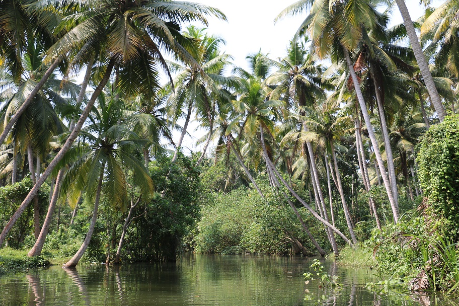 Kovalam_Backwaters_1