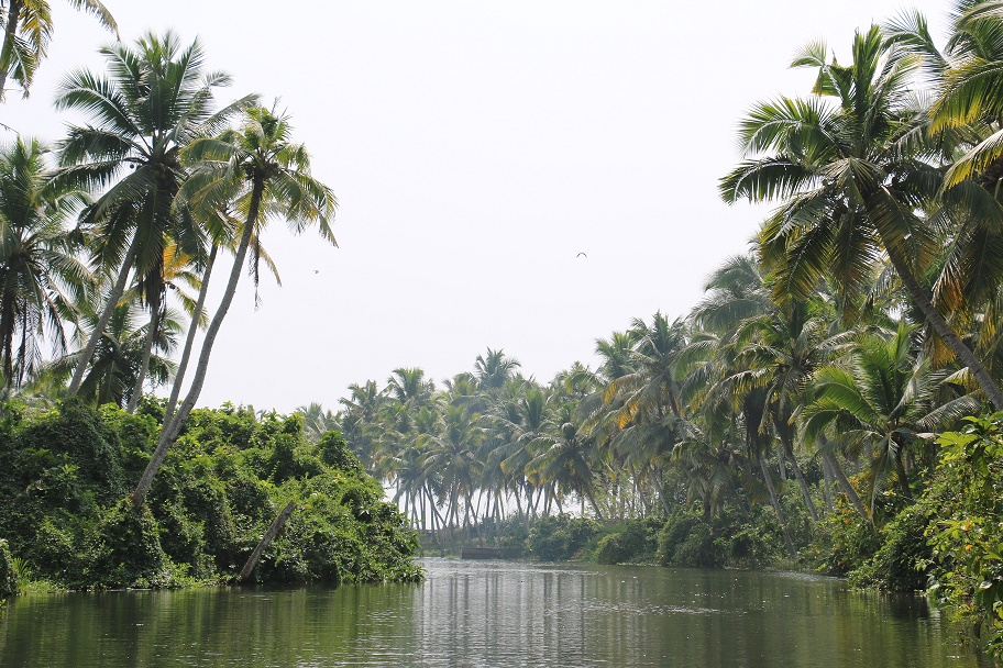 Kovalam_Backwaters_2