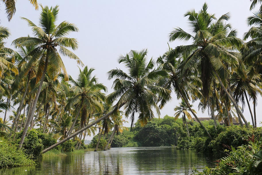 Kovalam_Backwaters_4