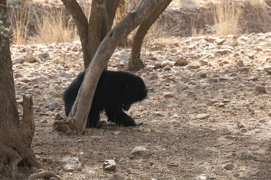 Eine_Safari_im_Ranthambore_Nationalpark_9_thebraidedgirl