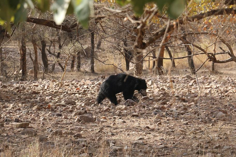 Eine_Safari_im_Ranthambore_Nationalpark_thebraidedgirl