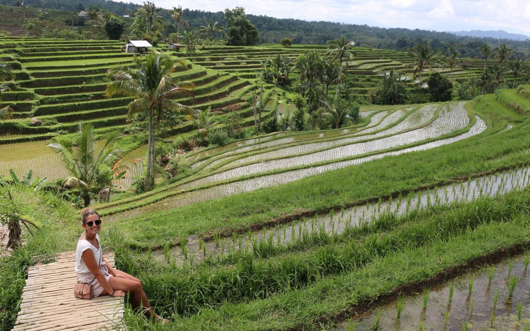 Jatiluwih – Die schönsten Reisterrassen auf Bali