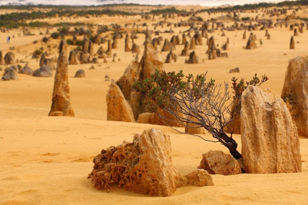 pinnacles-desert-12-thebraidedgirl