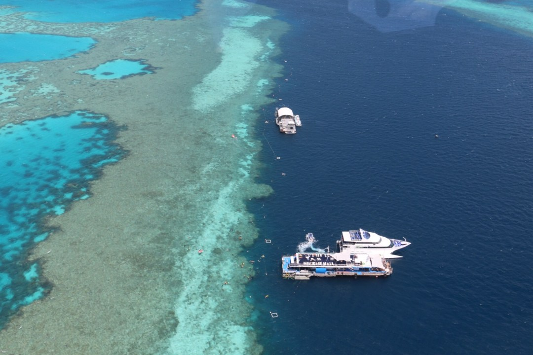 Great Barrier Reef Snorkeling Trip | thebraidedgirl