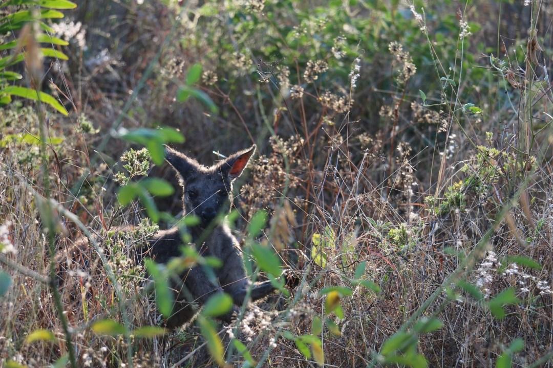 undara-volcanic-nationalpark-campground-thebraidedgirl