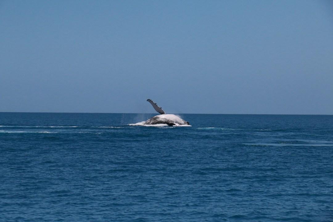 whale-watching-hervey-bay-6-thebraidedgirl