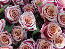 800px-Bouquet_de_roses_roses