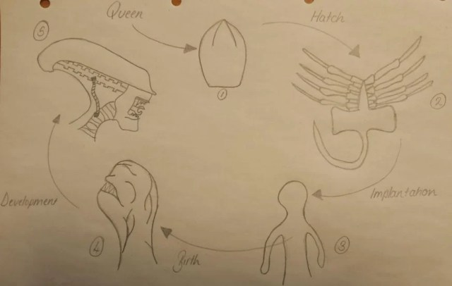 """Putting my well-practised, """"parasite-life-cycle-specific"""" drawing skills to good use even years on from all of my undergraduate exams."""