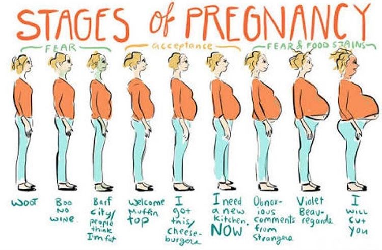 pregnancy meme?resize=617%2C405 morning sickness archives the brave little mama!