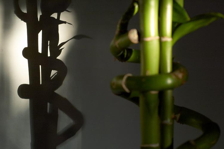 bamboo-shadows